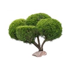 Декоративные растения и кустарники